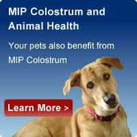 colostrum pets